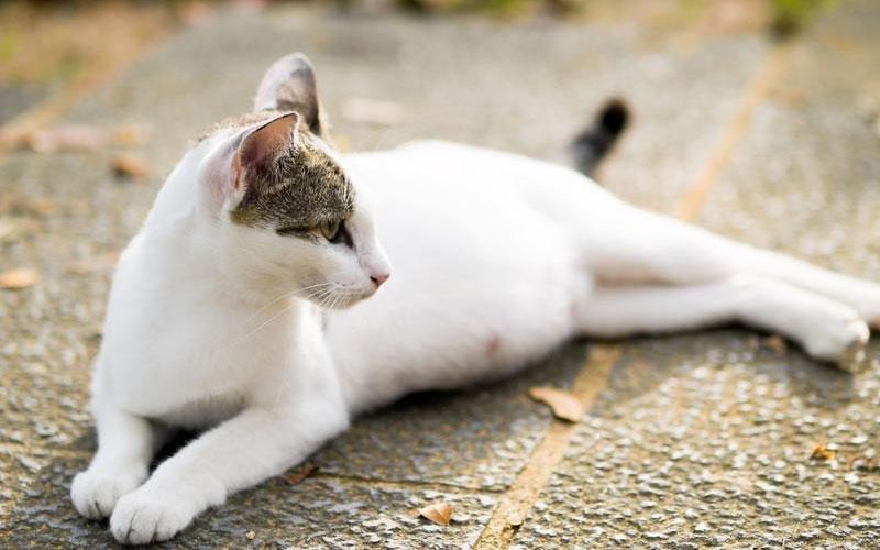 Аборты кошке и собаке виды, сроки, осложнения