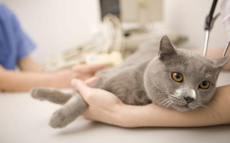 Аборты у кошек и собак