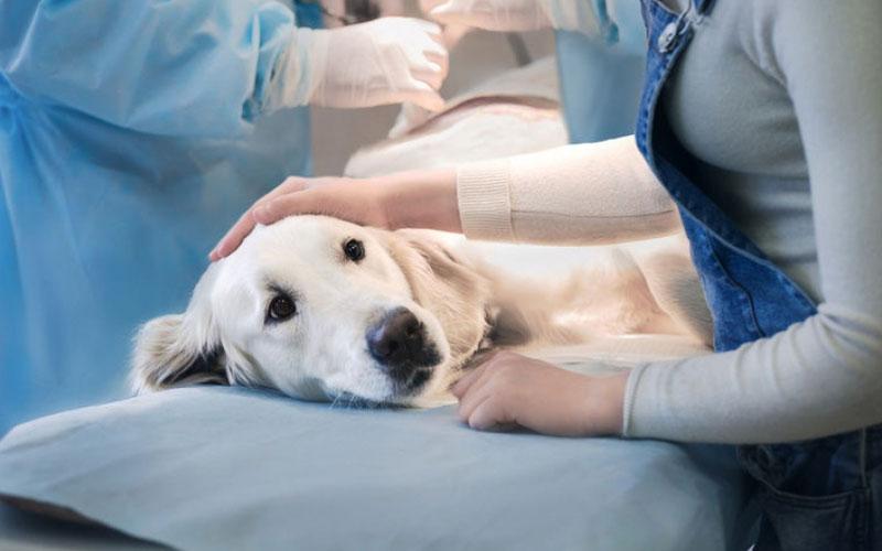 Особенности аборта у собак и кошек