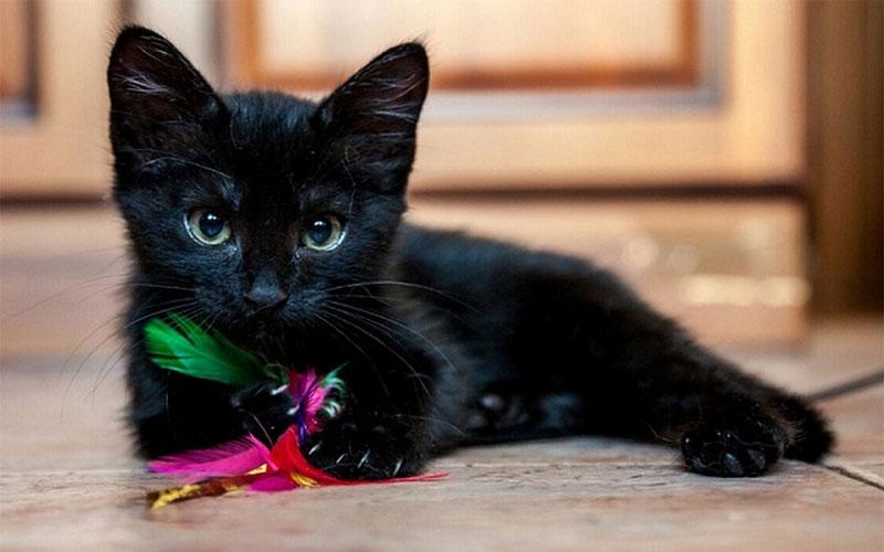 Как назвать черного котенка девочку и мальчика