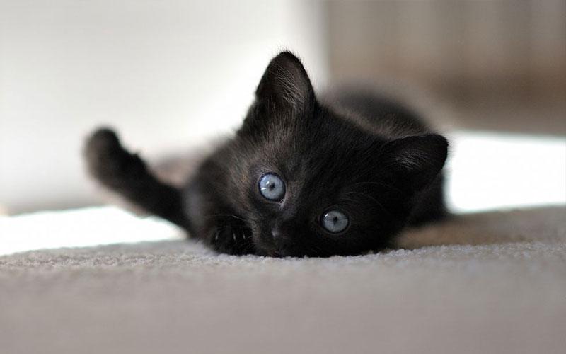 Как подобрать имя для черного котенка