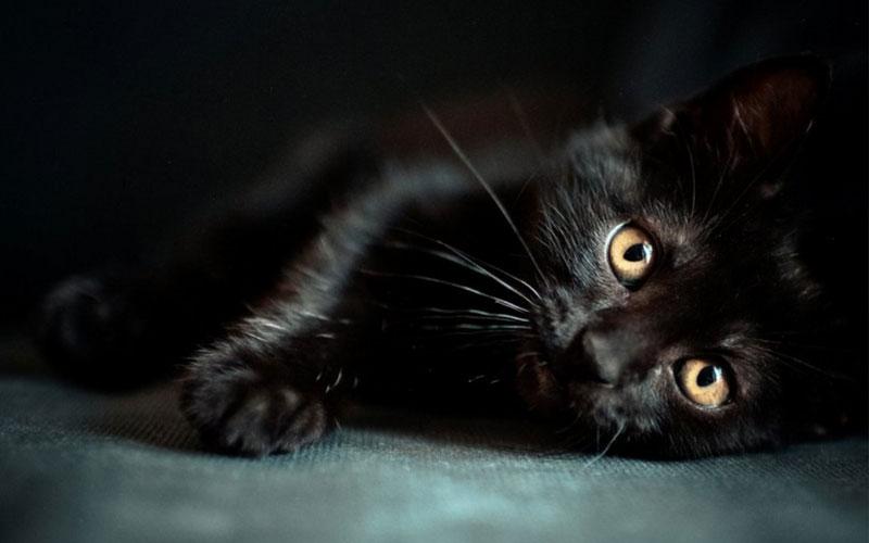 Креативные имена для черного котенка