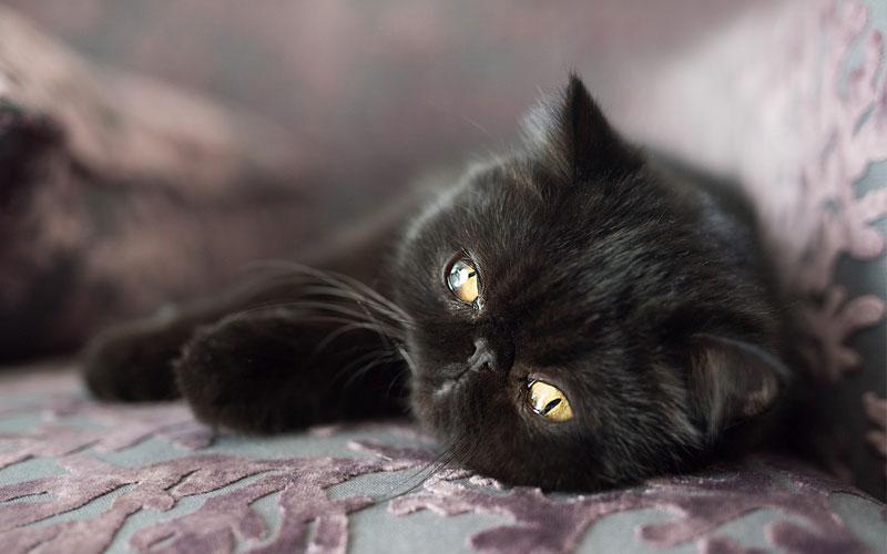 Имена для черного кота и кошки
