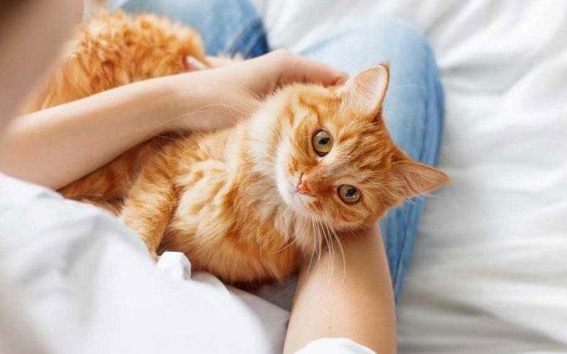 Сердечная недостаточность у котов, виды, симптомы, диагностика и лечение