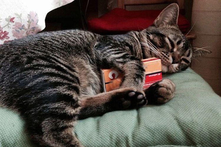 Кот держит в лапах упаковку таблеток