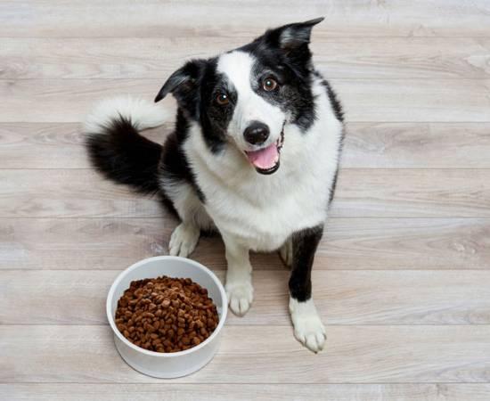 Корма для собак эконом класса