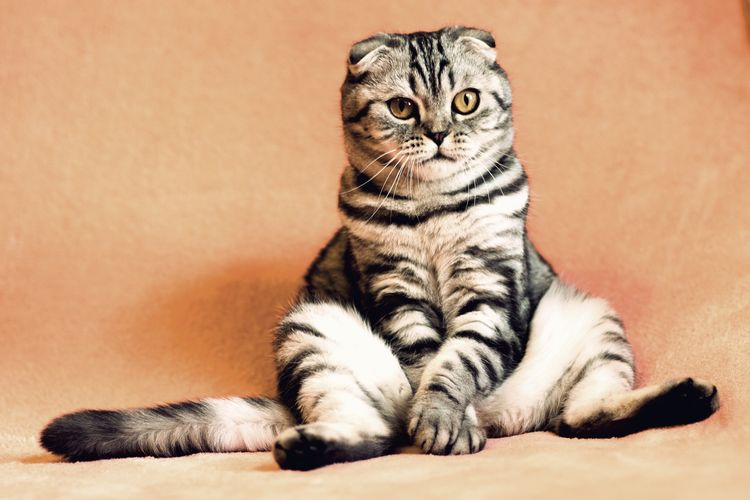 Кот сидит