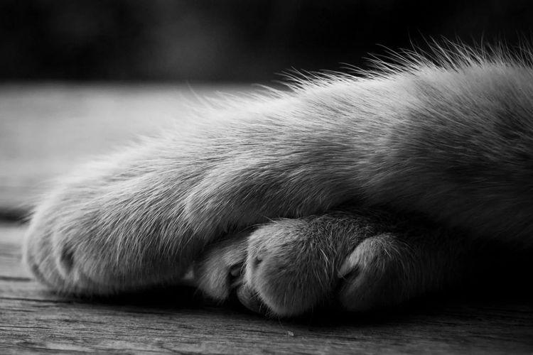 Смерть кота