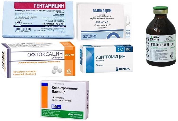 Препараты для лечения микоплазмоза у кошек