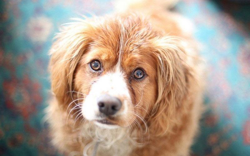 Виды папиллом у собак и их лечение