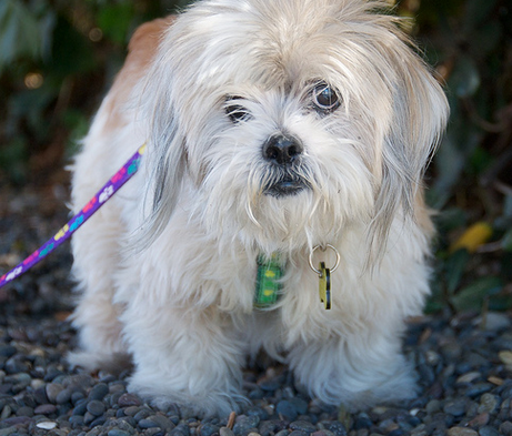 Аллергический дерматит у собак - Скажи аллергии НЕТ!
