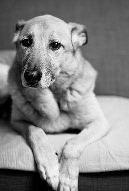 Инфаркт спинного мозга у собаки
