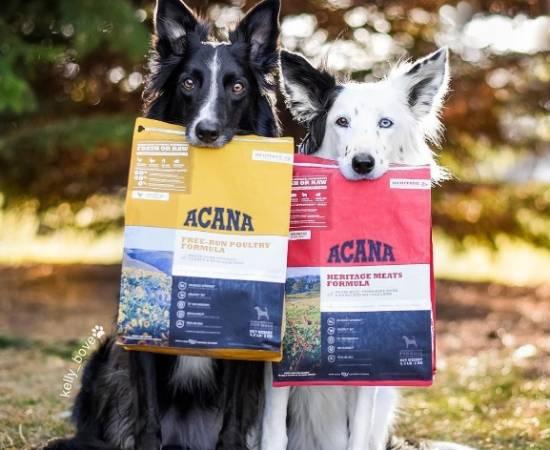 Акана корм для собак