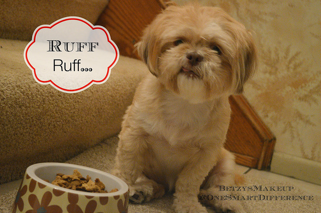 Собака ест сухой корм