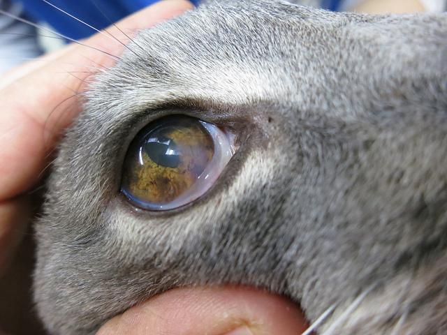 Кератит у кошек и котов: фото, симптомы и лечение