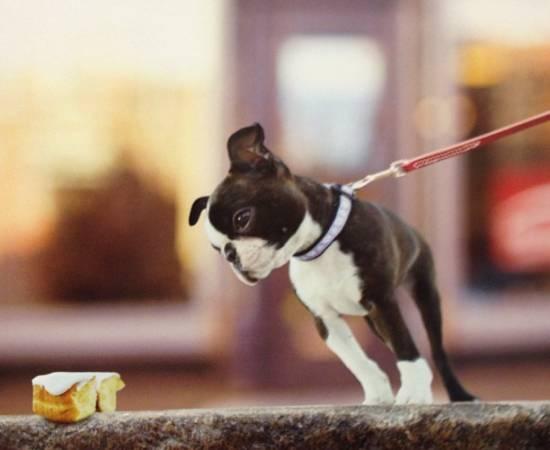 Собака и еда