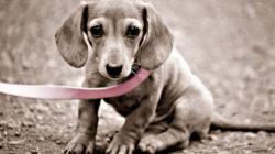 Лежанка для собаки своими руками выкройки фото 838