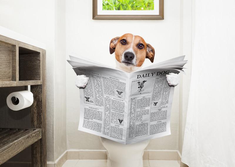 диетическое питание щенка после отравления