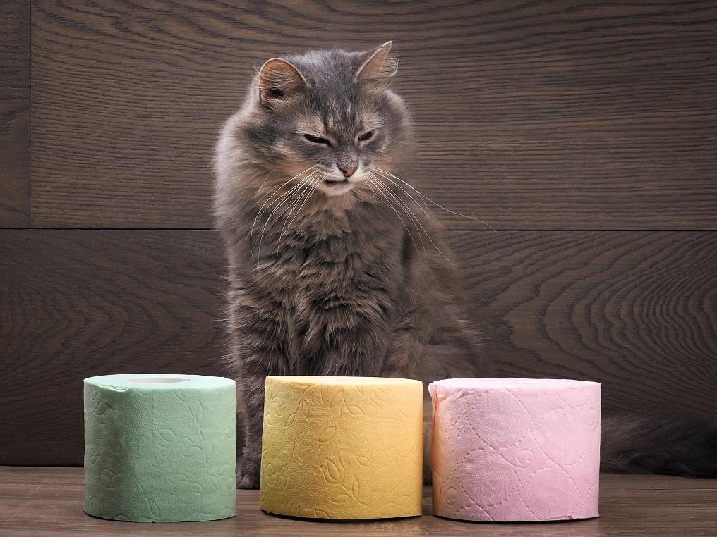 Почему у кошки после стерилизации понос