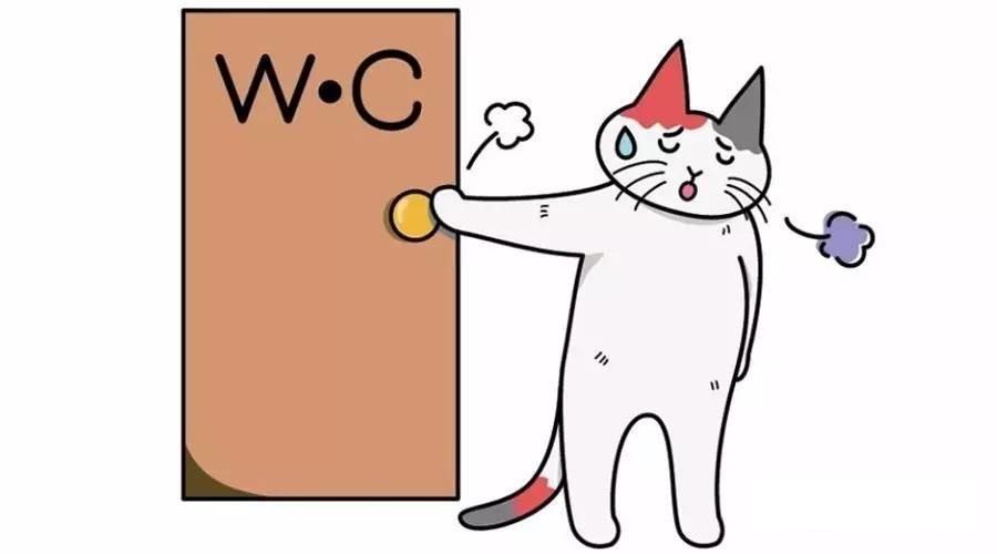 Понос у кошки - что делать?