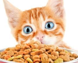 Чем кормить котенка