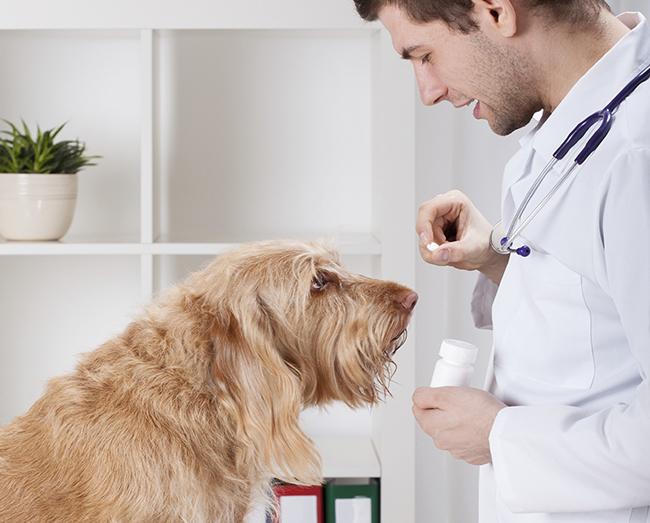 Как давать таблетку от глистов собаке