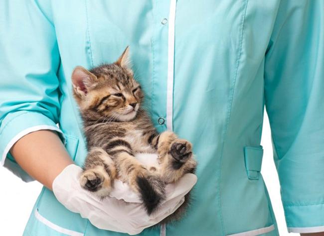 лечение коронавируса у кошек