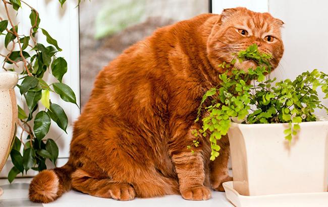 Кот ест домашние растения