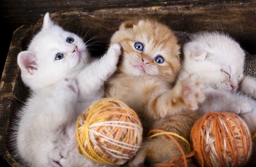 Чем кормить котят в 3-4 месяца