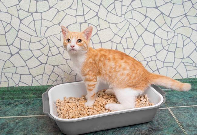 Как выбрать биотуалет для кошек Биотуалет для кошек - обзор устройств