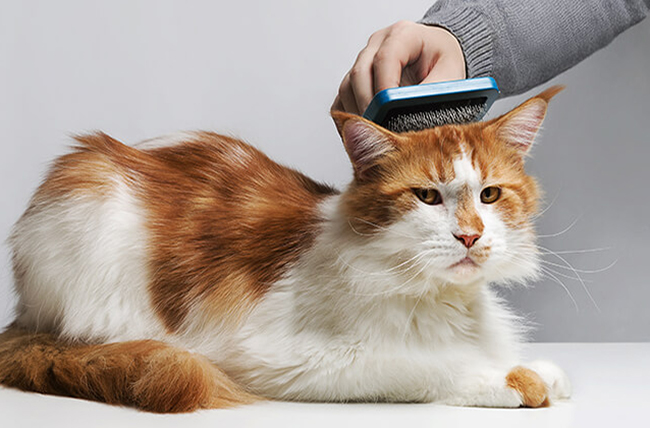 Уход за шерстью кошки - вычесывание