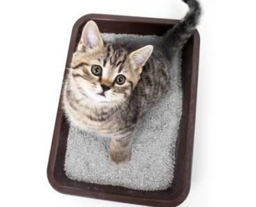 Лучшие лотки для котят