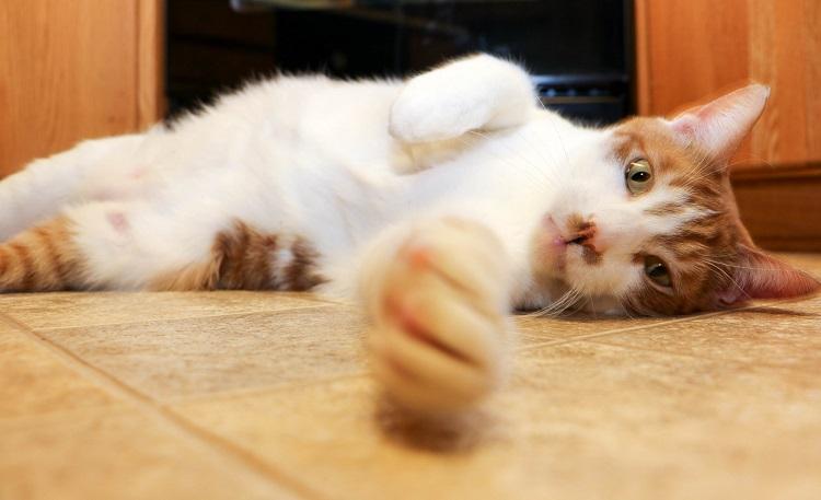 Простуды и лечение котов