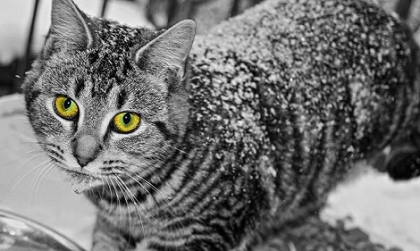 Бывает простуда у кошек thumbnail