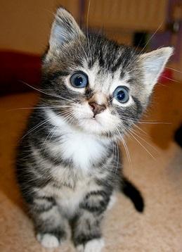 Фото как узнать кот или кошка