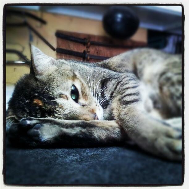 Простыла кошка чем лечить в домашних условиях — Простуда