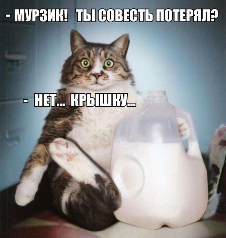 Кот и бутыль молока