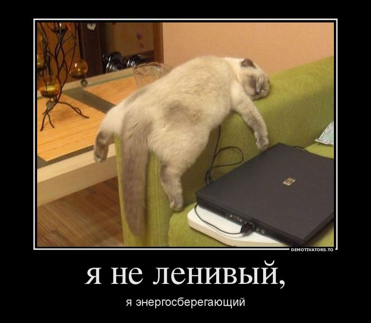 Толстый кот спит на подлокотнике