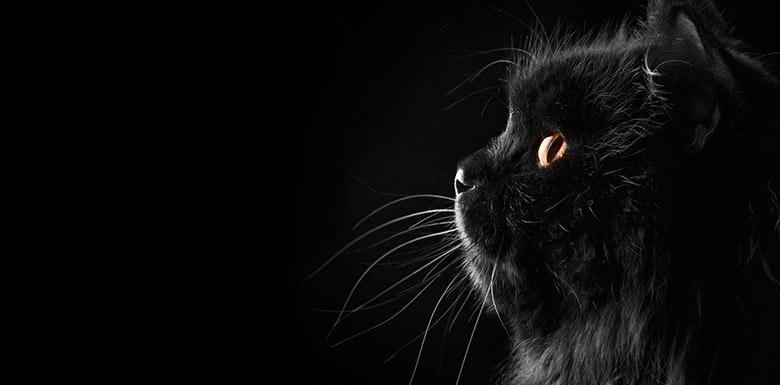 Клички для кошек черных