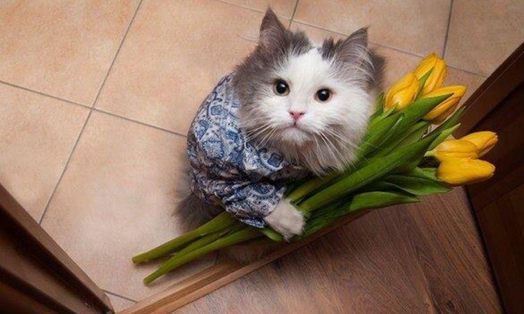 Кот с тюльпанами