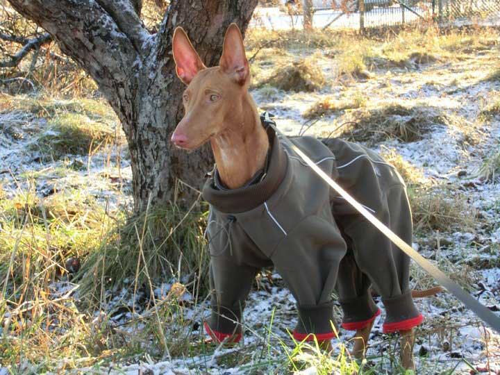 фараонова собака одежда