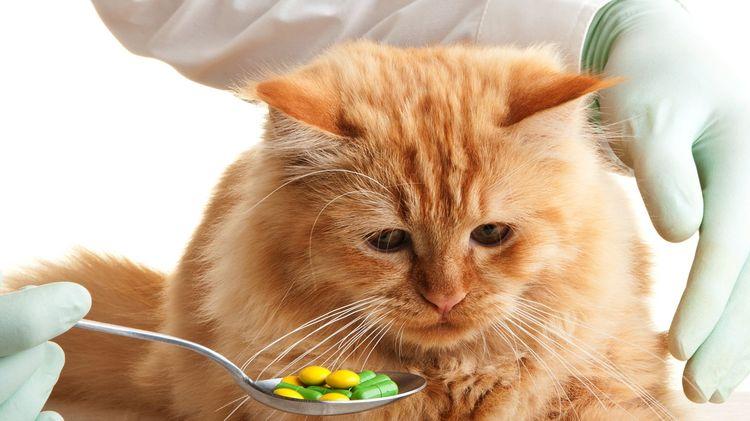 Коту предлагают таблетки