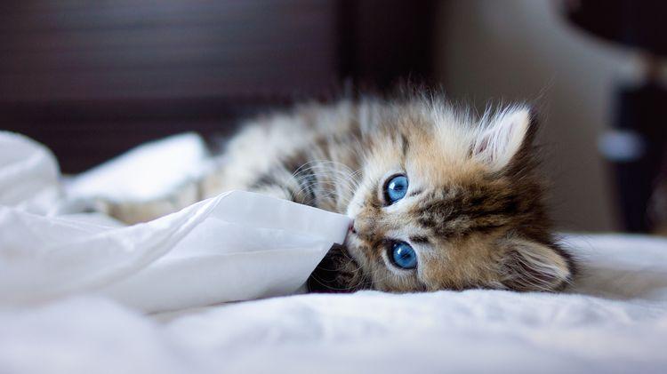 Котенок на постели