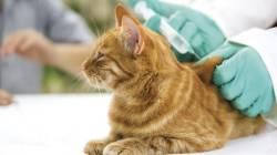 Кошка после операции как ухаживать