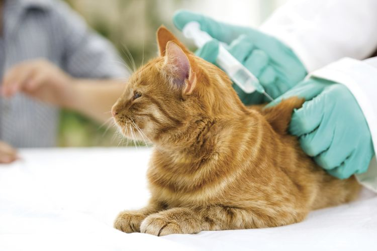 Вакцинация кота