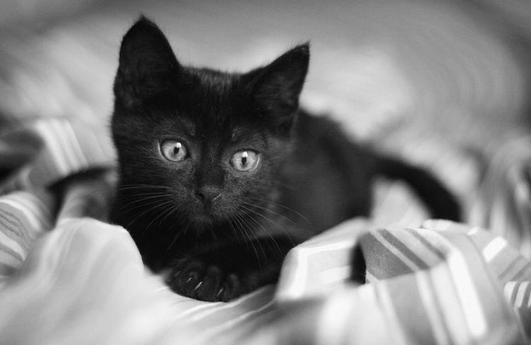 Красивый черный котенок