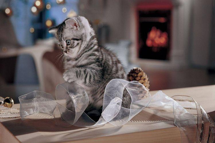 Серый котенок с лентой