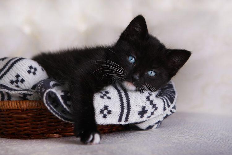 Черный котенок в корзинке