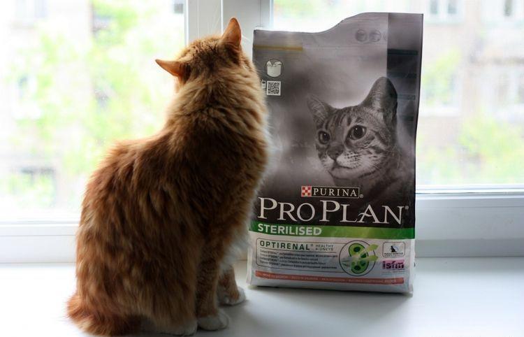 Кошка и пакет корма