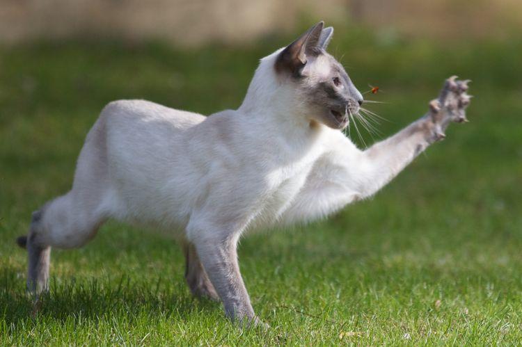 Кот охотится на насекомое